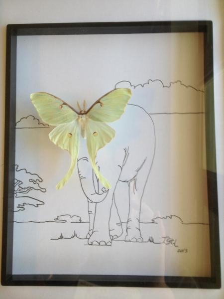 La valse des Éléphants