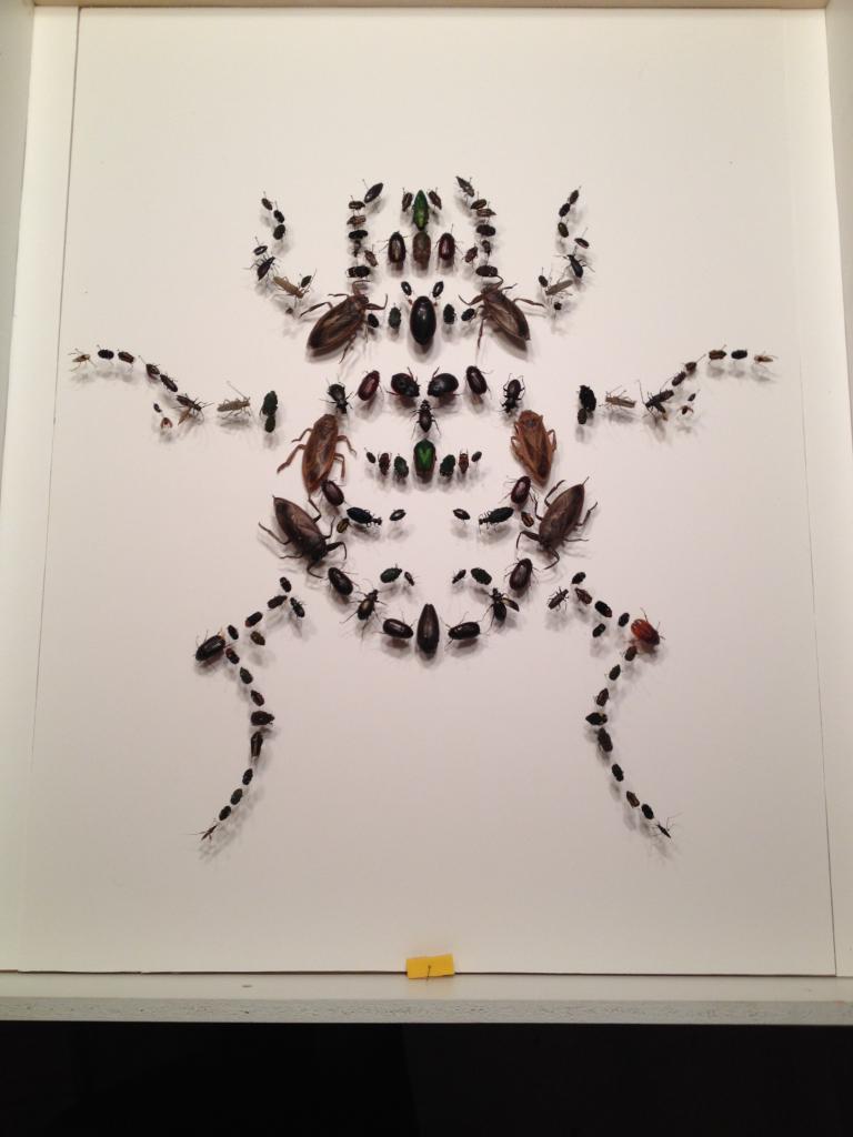 Un coléoptères de 100 coléoptères