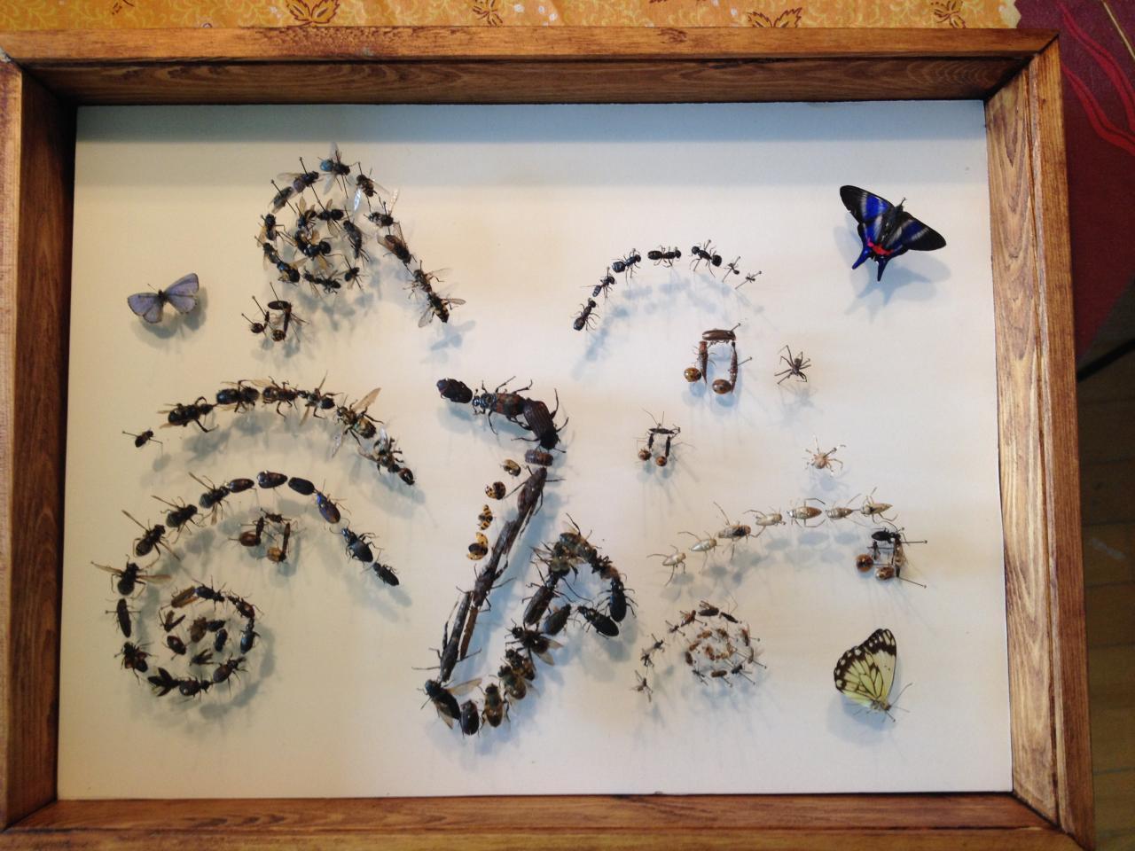 Les Insectes en fête !